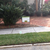 Arrow Environmental Services - Residential & Commercial Pest Control in Orlando, FL - Gallery Photo 2