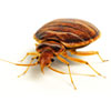 Bed Bug Solutions